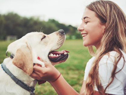 Zabawy umysłowe dla psa - TOP 5