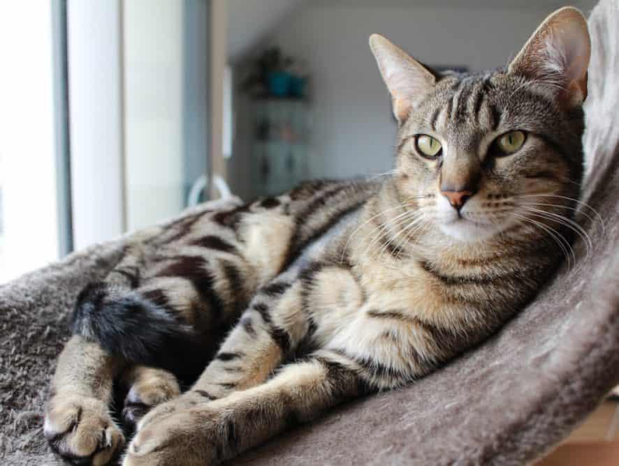 Nowy członek rodziny - kot. Co warto kupić na początek?