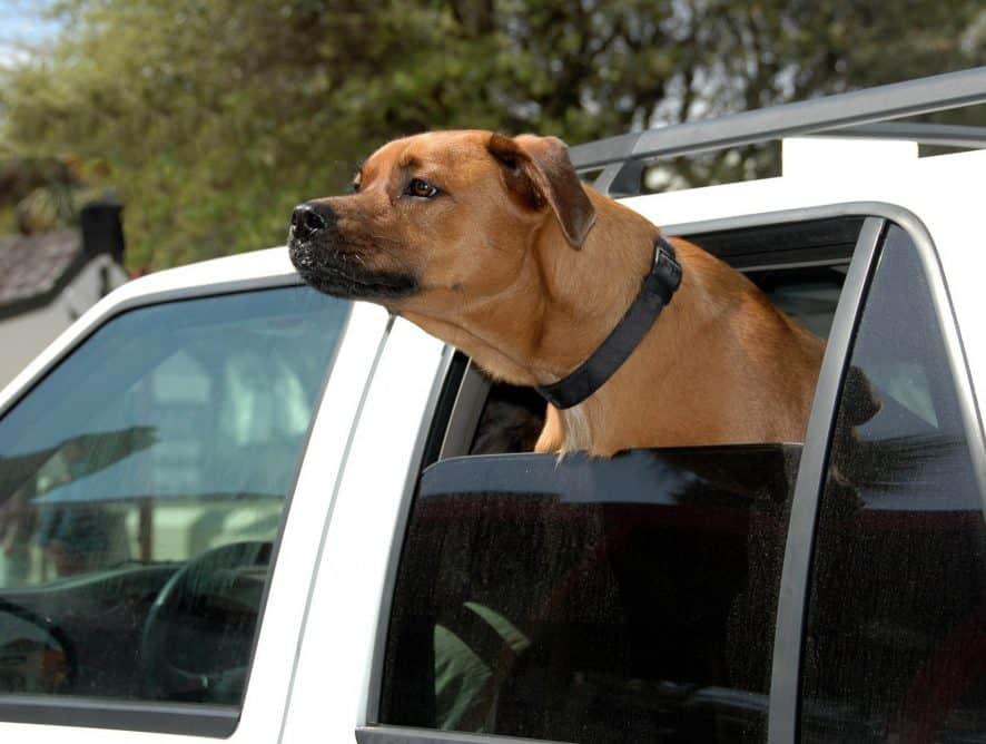 Jak zadbać o bezpieczeństwa psa podczas podróży samochodem?