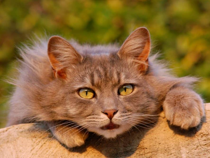 Jak wzmocnić sierść u kota?