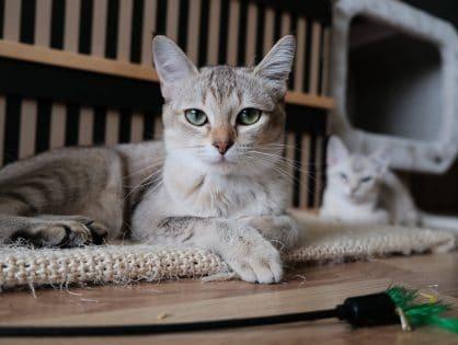 Najciekawsze zabawki domowe dla kota