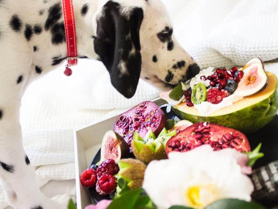 Czego absolutnie nie powinien jeść pies?