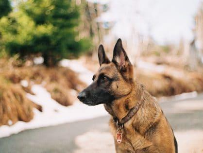 Tresura psów - czy warto?