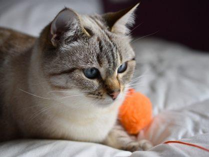 Czy wszystkie koty powinny wychodzić na zewnątrz?