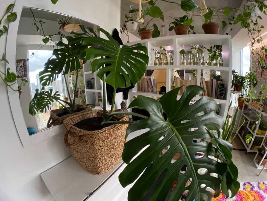 Dżungla w mieszkaniu? Sprawdź, jak urządzić wnętrze w stylu urban jungle!