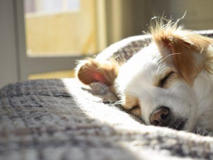 Legowisko dla psa – jakie wybrać?