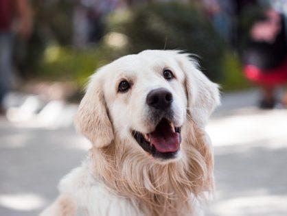 Poznaj złe nawyki, które Twój pies może przejąć od... Ciebie