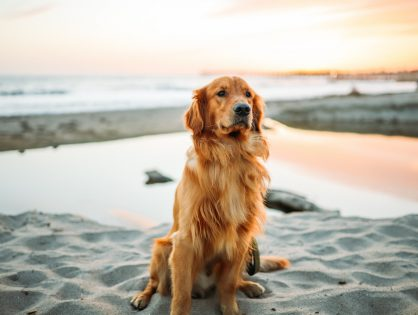 Dobra karma i regularne badania - klucz do zdrowia Twojego psiaka