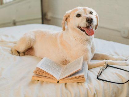 Jak przygotować się na to, że w domu zamieszka pies?