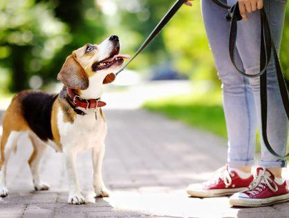 Jak dbać o psa latem?
